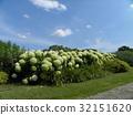 花朵 花卉 花 32151620