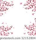cherry blossom flowers 32152804