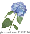 hydrangea flower watercolor 32153236