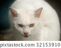 猫 猫咪 小猫 32153910