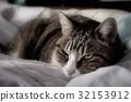 毛孩 貓 貓咪 32153912