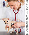 Veterinary with a Chihuahua puppy 32154608