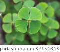 Four Leaf Clover 32154843