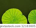 foliage, leaf, leafs 32163605