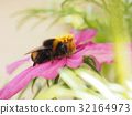 bee bumble flower 32164973