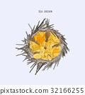 Fresh Sea Urchin Eggs or Uni vector. 32166255