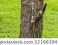 Cute squirrel 32166394
