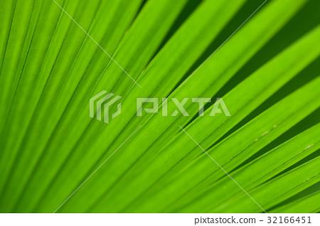 Green palm tree leaf 32166451