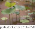 雨池在雨中 32169650