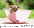 Pretty cat kitten 32170335