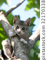 Pretty cat kitten on tree 32170338