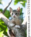 adorable cat kitten 32170340