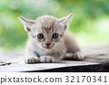 cat kitten on nature background 32170341