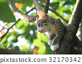Pretty cat kitten on tree 32170342