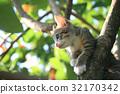 Pretty cat kitten on tree 32170342