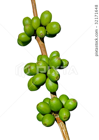 Green coffee beans isolated on white 32171648