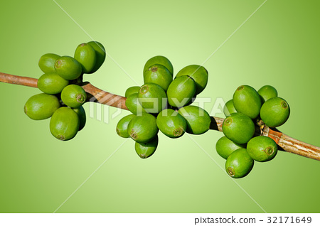 Green coffee beans 32171649
