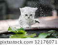 kitten shakes the water off its leg 32176071