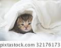 婴儿 宝宝 猫 32176173
