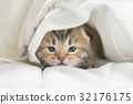 Cute tabby kittens lying 32176175