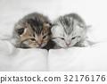 动物 猫 猫咪 32176176