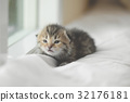 Cute tabby kitten sitting looking . 32176181