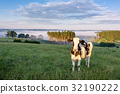 Belgian countryside - Ardennes. Cows on pasture 32190222