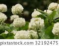 花朵 花卉 花 32192475