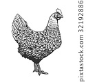 Chicken or hen drawn in vintage engraving or 32192886