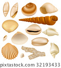 vector, seashell, shell 32193433