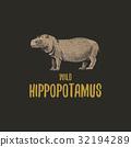 hippopotamus, animal, wildlife 32194289