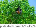 棒球棒 蝙蝠 分支 32194576