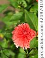 bloom, blossom, blossoms 32197019