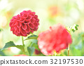 bloom, blossom, blossoms 32197530
