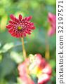 bloom, blossom, blossoms 32197571