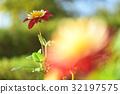 bloom, blossom, blossoms 32197575