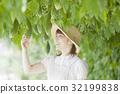 苦瓜 農民 農夫 32199838