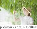 苦瓜 農民 農夫 32199840