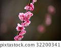 桃花 桃子 水蜜桃 32200341