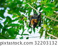 Bat hanging on a tree branch Malayan bat 32203132