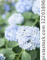 繡球花 花朵 花 32203896
