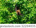 動物 棒球棒 蝙蝠 32204035