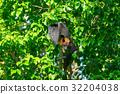 動物 棒球棒 蝙蝠 32204038