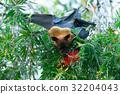 動物 棒球棒 蝙蝠 32204043