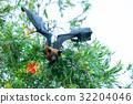 動物 棒球棒 蝙蝠 32204046