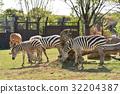 動物園 橫濱 若西亞動物園 32204387