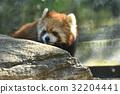 小熊貓 橫濱 動物園 32204441