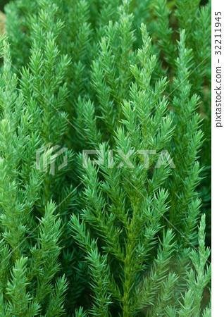Closeup of green tree 32211945