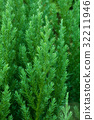 Closeup of green tree 32211946