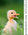 Little duckling on green grass 32212511